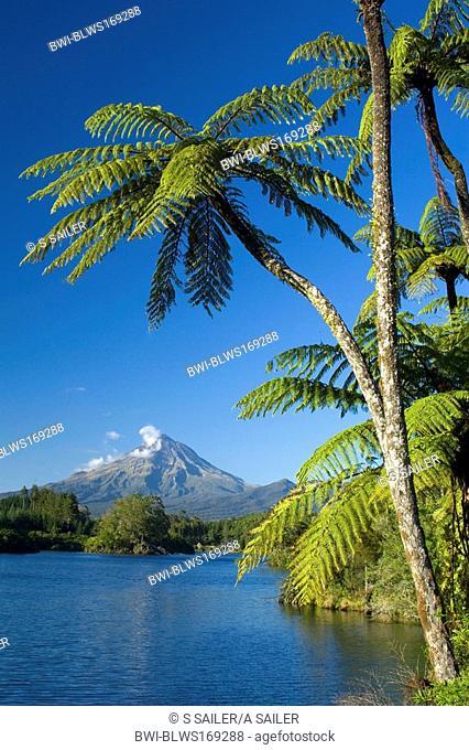 Mount Egmont, lake, tree ferns and perfectly cone-shaped volcanoe Mt Egmont, also called Mt Taranaki, New Zealand, Southern Island, Taranaki