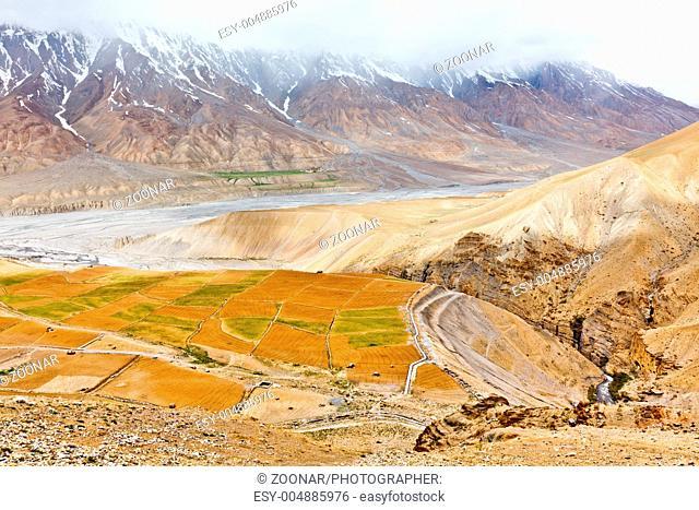 Fields in Spiti Valley in Himalayas. Himachal Pradesh