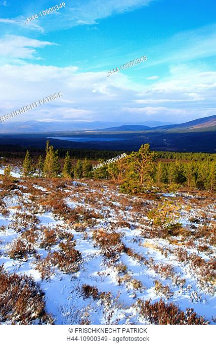 View, tree, mountain, mountains, mountain panorama, trees, Cairgorms, Cairgorms Mountains, Cairngorms, Erika, cliff, rock, cliff, mountains, moor, highlands