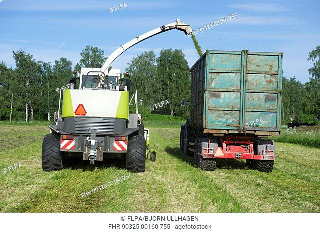 Claas Jaguar 850 forage harvester, cutting grass for silage and loading wagon, Alunda, Uppsala, Sweden, june