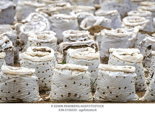 Full frame of bags with soil on a farm in Ganta, Liberia