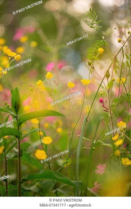 Multicolor Wild Flowers In The Meadow