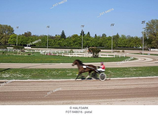 Harness racer on a track