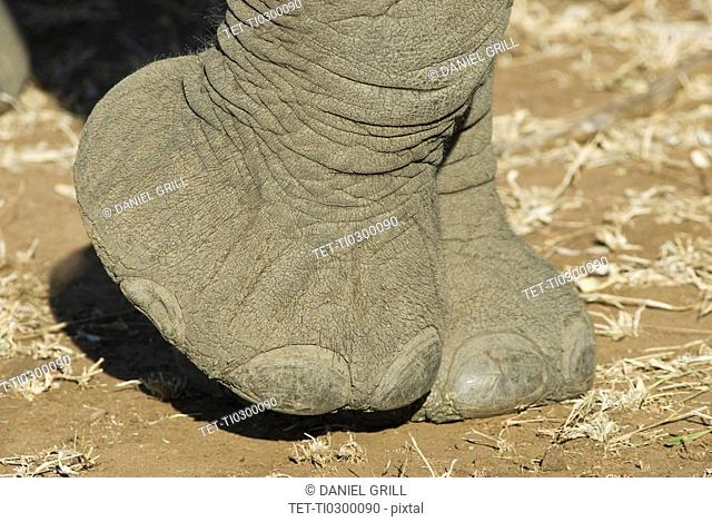 Close up of elephant foot