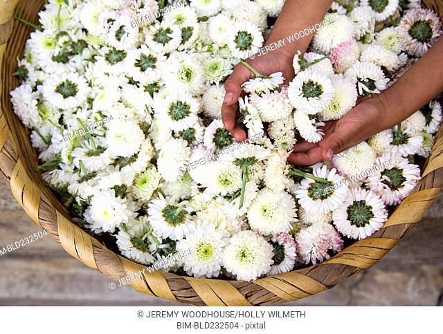 Hispanic woman holding flowers in basket