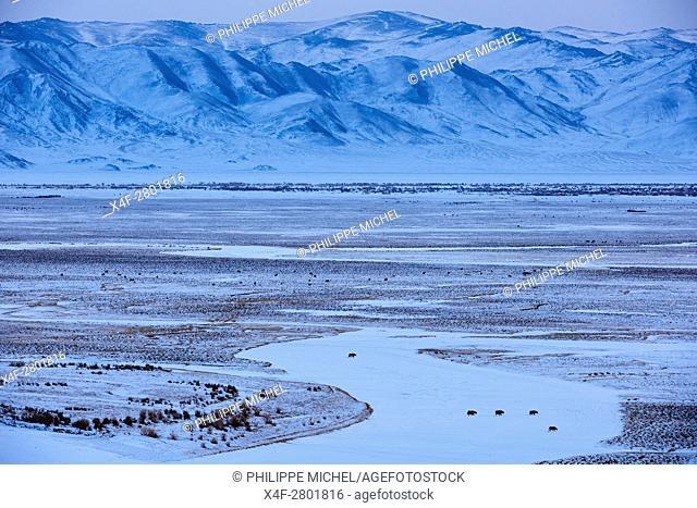 Mongolia, Bayan-Olgii province, landscape in winter, herd of yaks