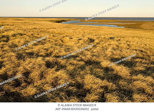 Moist sedge meadow along coastal wetlands. Teshekpuk Lake. National Petroleum Reserve. Spring Arctic Alaska