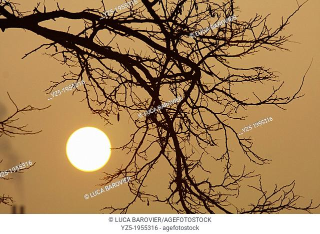Rising sun and tree