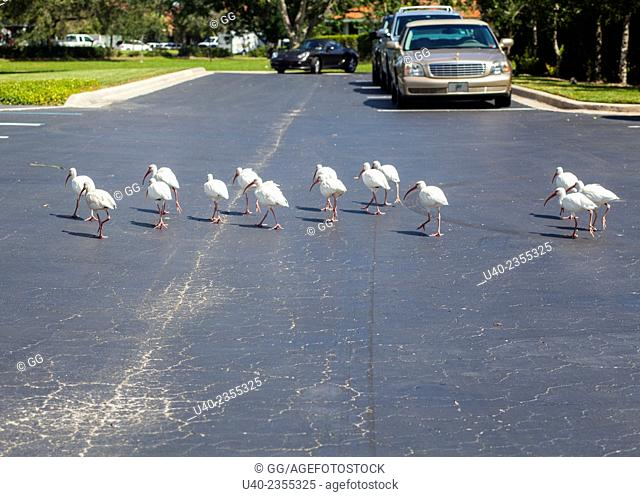 Birds walking in parking lot