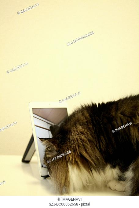 Tablet PC and a cat