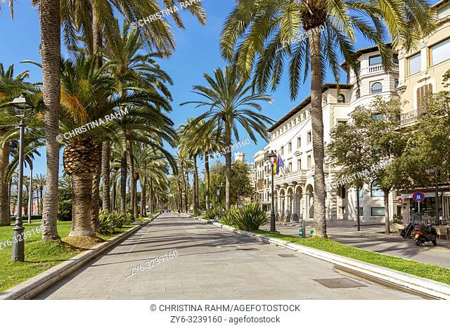 PALMA DE MALLORCA, SPAIN - FEBRUARY 9, 2019: Beautiful palm decorated promenade on Paseo Maritimo in winter sunshine on February 9, 2019 in Palma de Mallorca
