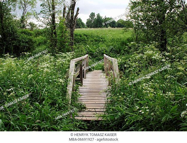 Wooden bridge in Bieszczady National Park, Poland, Europe