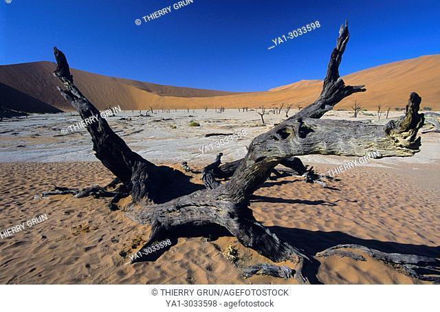 Namibia, Namib-Naukluft National park, Sossusvlei, Dead vlei, Dead Camel Thorn trees (acacia erioloba)