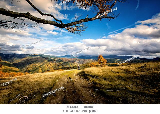 Road in Charpathians mountains