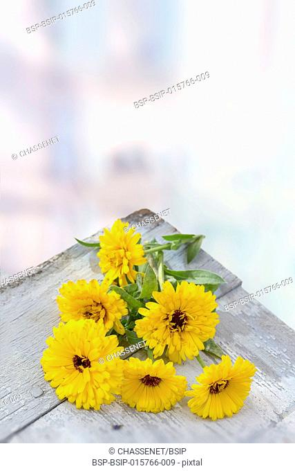 Calendula. Marigold flower with leaf white wooden table