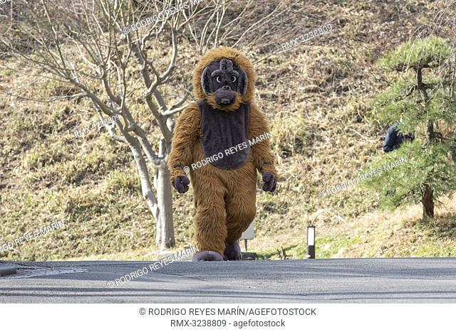 February 22, 2019, Tokyo, Japan - A zookeeper wearing orangutan costume tries to escape during an Escaped Animal Drill at Tama Zoological Park