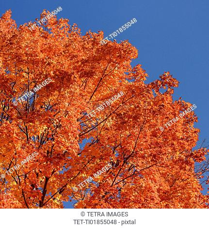 low-angle view of tree with autumn leaves