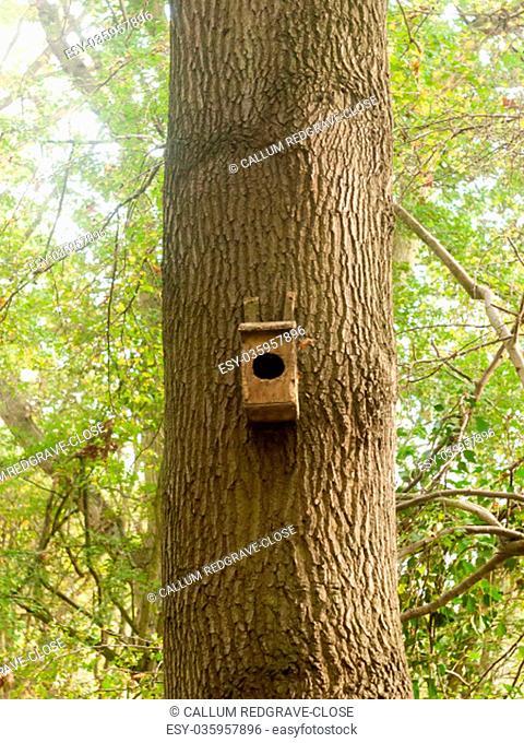 empty tree wooden handmade original bird box; essex; england; uk