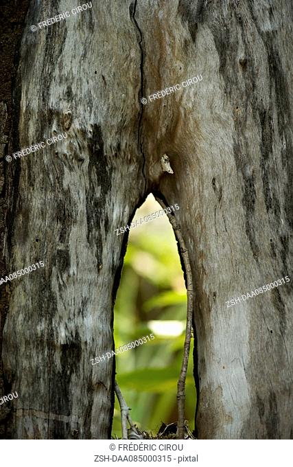 Close-up of mangrove trunk