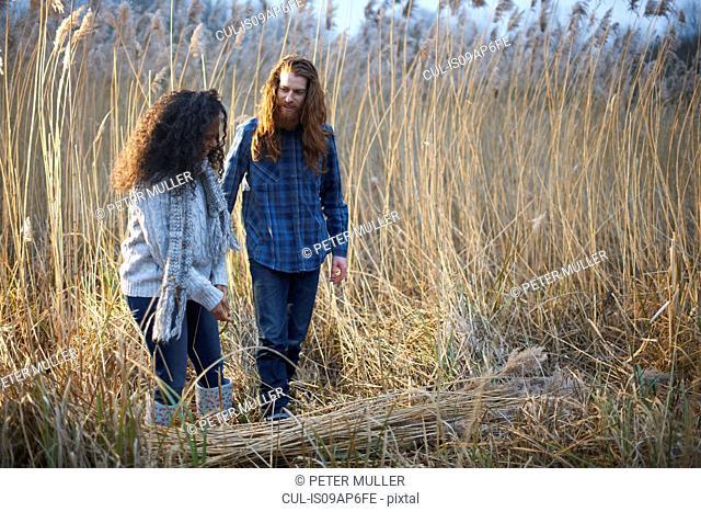 Couple harvesting wheat