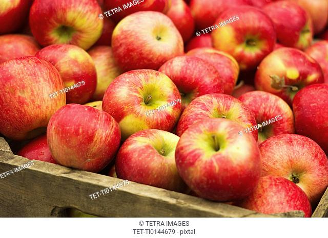 USA, New York, New York City, Apples in crate