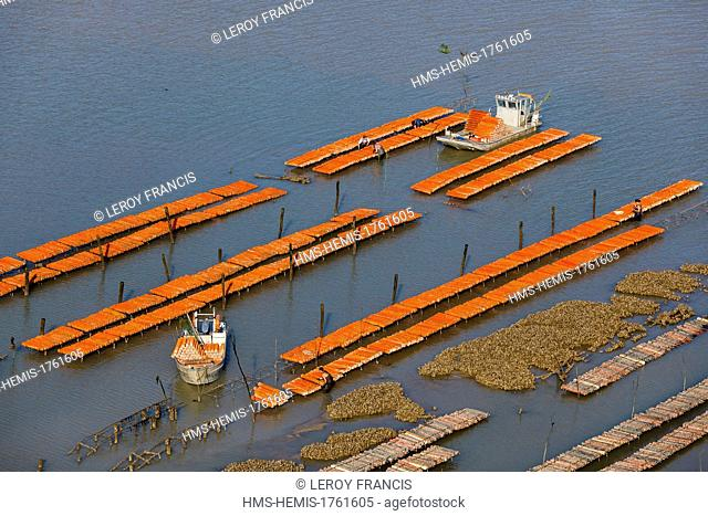 France, Charente Maritime, Port des Barques, oyster farm boat placing oyster collectors in a farm (aerial view)
