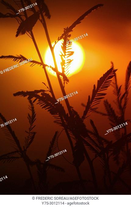 Sunset, Bokor Mountain, Kampot Province, Cambodia, South East Asia, Asia
