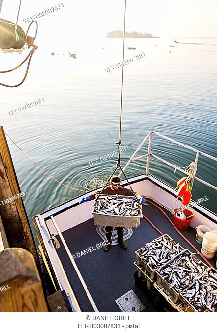 Man loading fish on boat