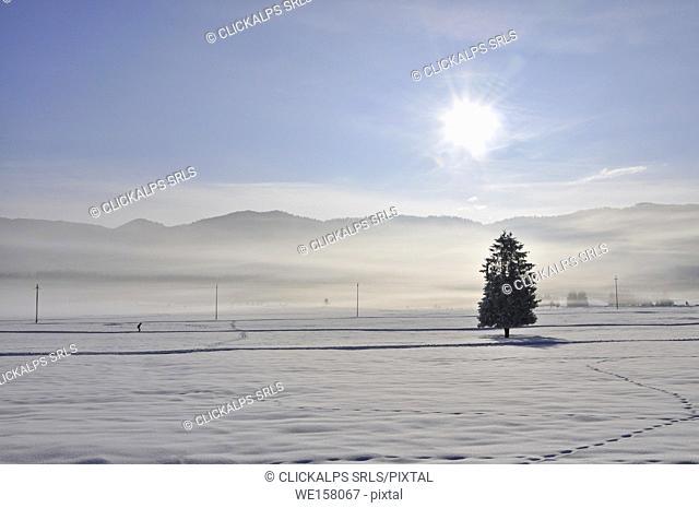 Winter in Pian Cansiglio, Farra d'Alpago, Belluno, Veneto, Italy