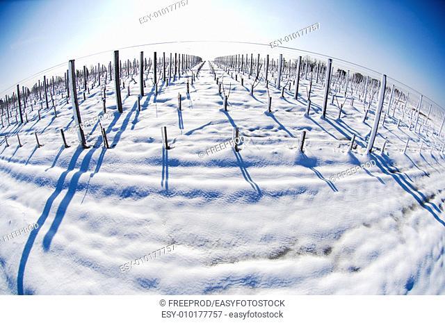 Snow covered vineyards-Bordeaux Vineyards
