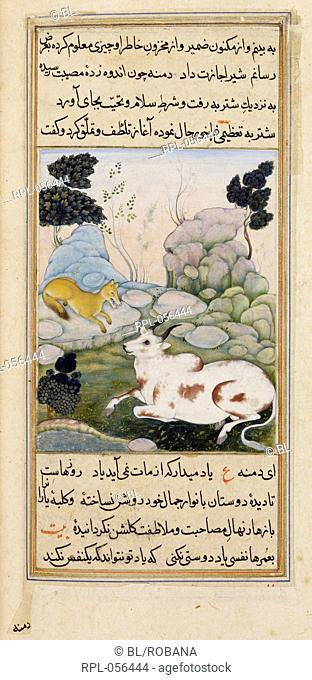 Dimna with the ox. A miniature painting from a seventeenth century manuscript of Anvar-i Suhayli a version of the Kalila va Dimna fables