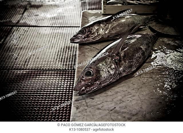 Fish market in Palermo Sicily Italy