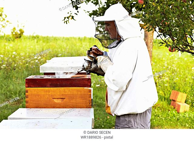 Beekeeper In Croatia, Europe
