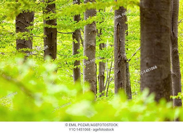 Dense forest with numerous trees