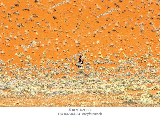 Oryx along the desert landscape in the NamibRand Nature Reserve in Namibia