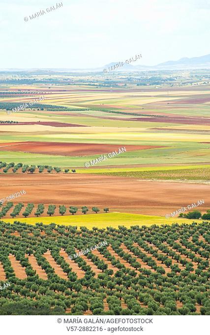 Cultivation fields. Los Yebenes, Toledo province, Castilla La Mancha, Spain