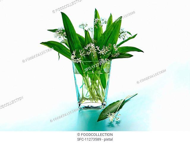 Fresh wild garlic in a glass vase