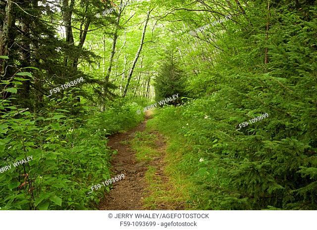 Trail, Shining Rock Wilderness Area, Pisgah National Forest, North Carolina, USA