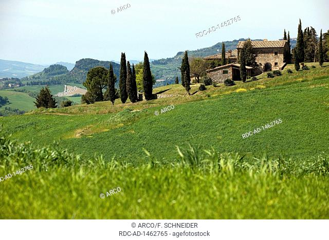 farm house with cypresses, Tuscany, Italy, Europe, Cupressus sempervirens