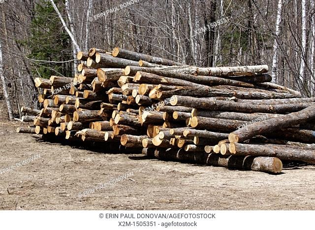 Pile of logs at a Timber Harvest site off of the Kancamagus Highway in the White Mountains, New Hampshire USA ready to be hauled away