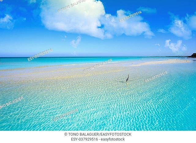 Caribbean turquoise perfect beach in Riviera Maya of Mexico