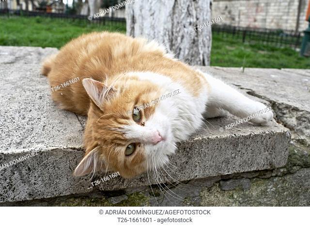 Friendly cat lying in Istanbul city, Turkey