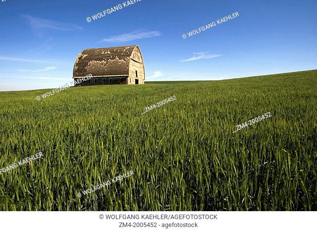 USA, WASHINGTON STATE, PALOUSE COUNTRY, OLD BARN IN WHEAT FIELD