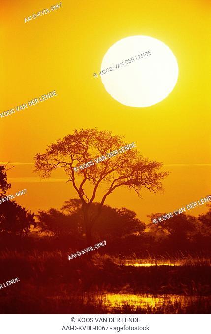 Sunset, Chobe, Botswana