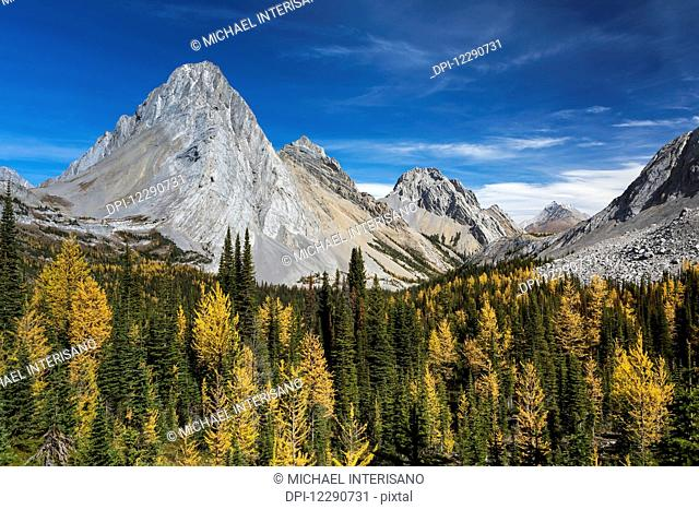 Alpine valley with colourful larch trees in autumn colours and rocky peaks with blue sky and clouds, Kananaskis Provincial Park; Alberta, Canada