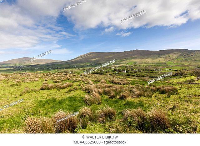 Ireland, County Cork, Beara Peninsula, Ring of Beara, Eyeries, tussock landscape