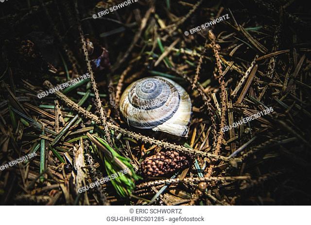 Snail Shell Among Twigs