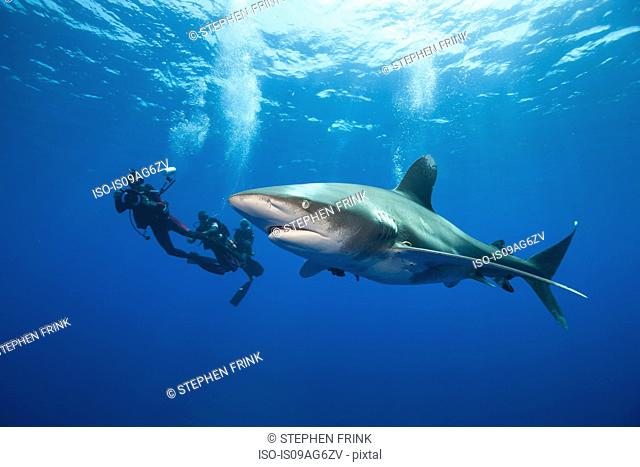 Divers and Oceanic whitetip
