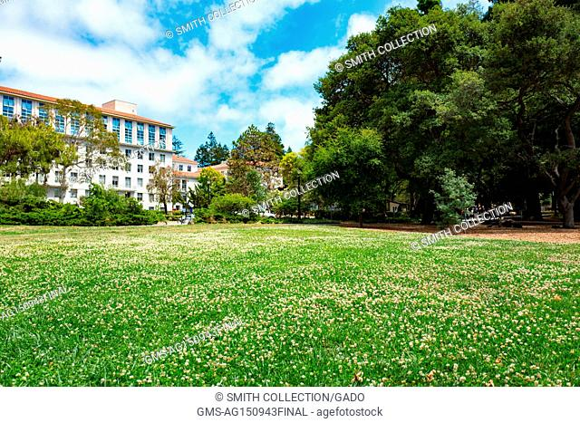 Field of flowers in front of an academic building on a sunny day, at the University of California Berkeley (UC Berkeley), a university in Berkeley, California