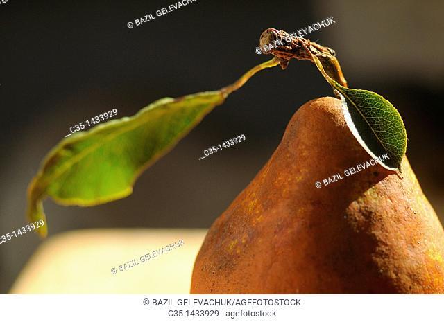 Leaf of a pear